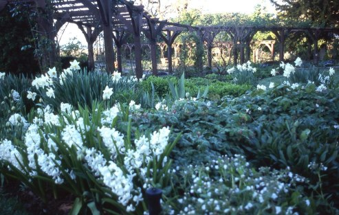 Group of hyacinths and violas