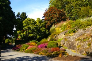 Rock and Alpine Garden