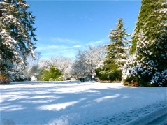 2017-winter-photo-10