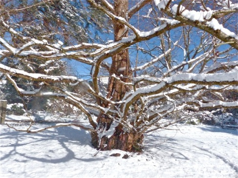 2017-winter-photo-11