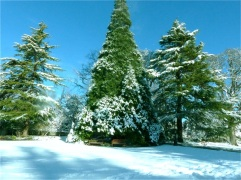 2017-winter-photo-6