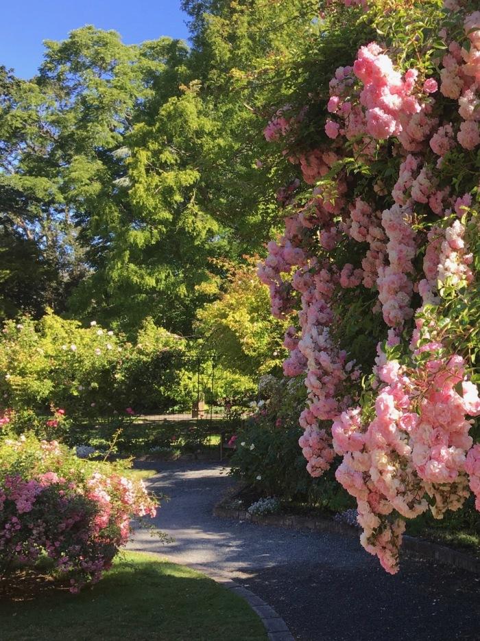 photo of the garden