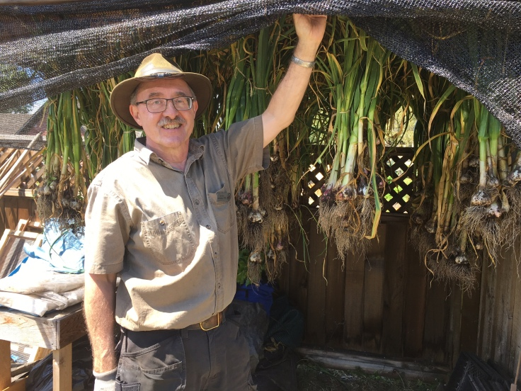 Image of garlic curing at Government House