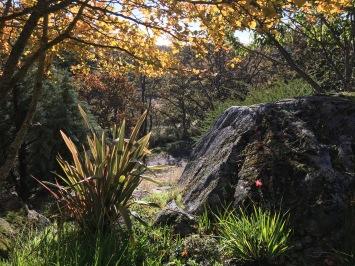 Woodland-view