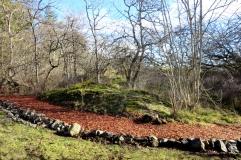 Woodlands trail