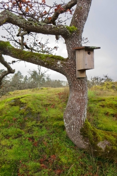 Birdbox in the Woodlands