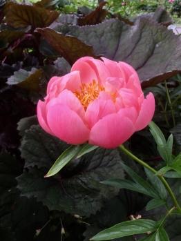 fghgs-english-country-garden-00002
