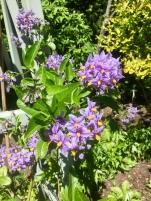 fghgs-english-country-garden-00009