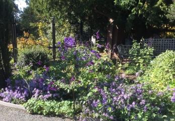 fghgs-english-country-garden-00010