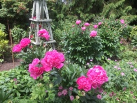 fghgs-english-country-garden-00011
